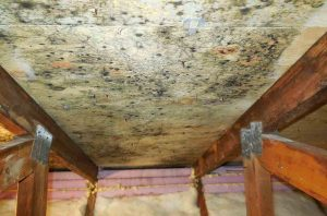 Oceanside Mold Inspection - A+ Inspections